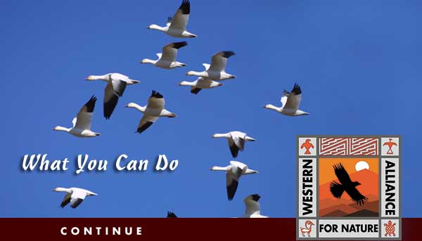 What you can do - Western Alliance for Nature - Preserving Natural and Indigenous Heritage