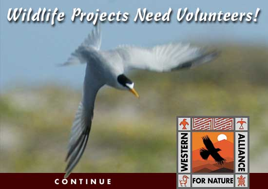 Wildlife Projects - WAN Conservancy - Western Alliance for Nature